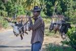 02 Madagaskar Huehnertransport