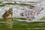 23 Madagaskar Krokodile