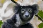 30 Madagaskar Lemur Andasibe