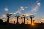 34 Madagaskar Sunset Baobabs