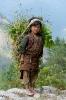 Nepal Grassammlerin