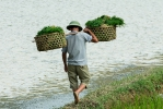 Vietnam 14 Reisplanzen Transport