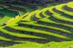 Vietnam 16 Reisterrassen Sa Pa 1